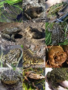 An Image of a collection of Wyoming amphibians.