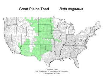 A map of the distribution of the Great Plains Toad.